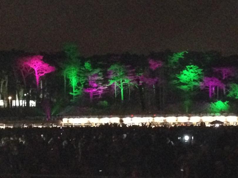 Golden Gate Park tree lights during the festival