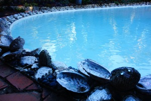 Local shells line the pool
