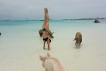 Yoga babe handstand with pigs in Bahamas