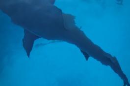 Danger Cay, Bahamas