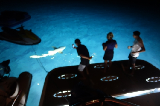 Shark sighting in the Bahamas